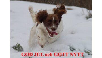 God Jul & Gott Nytt År! önskar Country Sports kennel