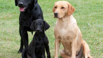 Pappa Rocky, mamma Mary och lilla Black Pearl aka Micro