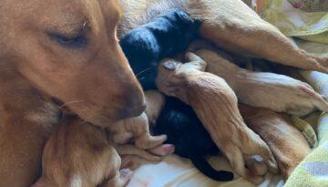 Belle har blivit mamma!