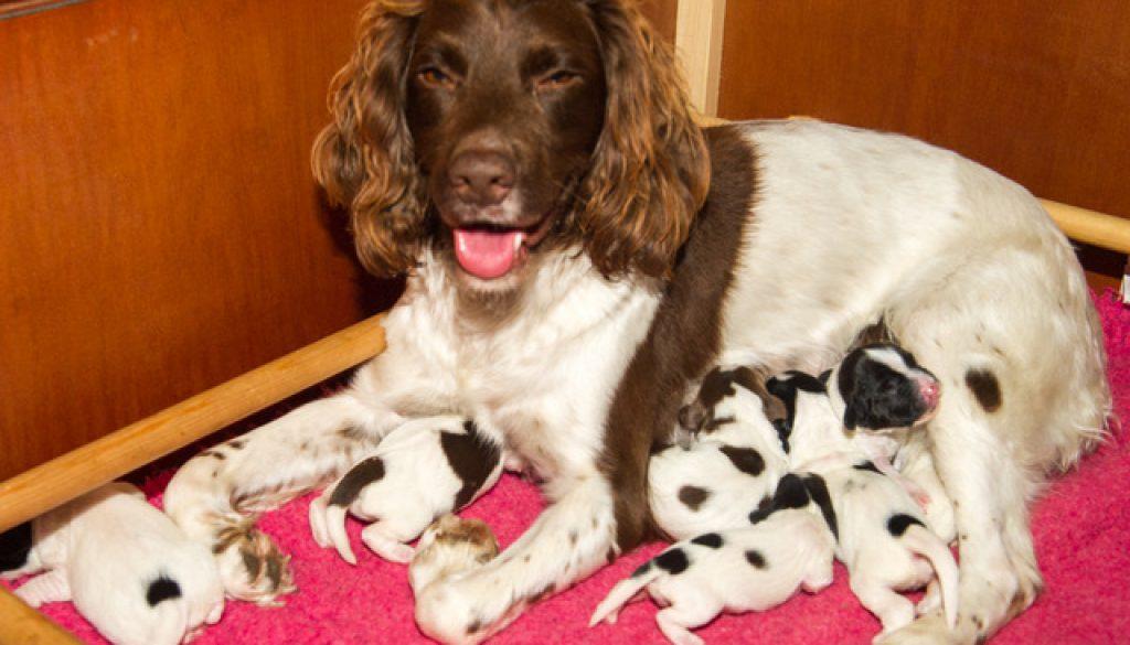 Mamma Emma med sina tre dagar gamla valpar